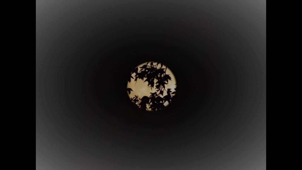harvest moon 2019 (23)_1568546946685.jpg.jpg