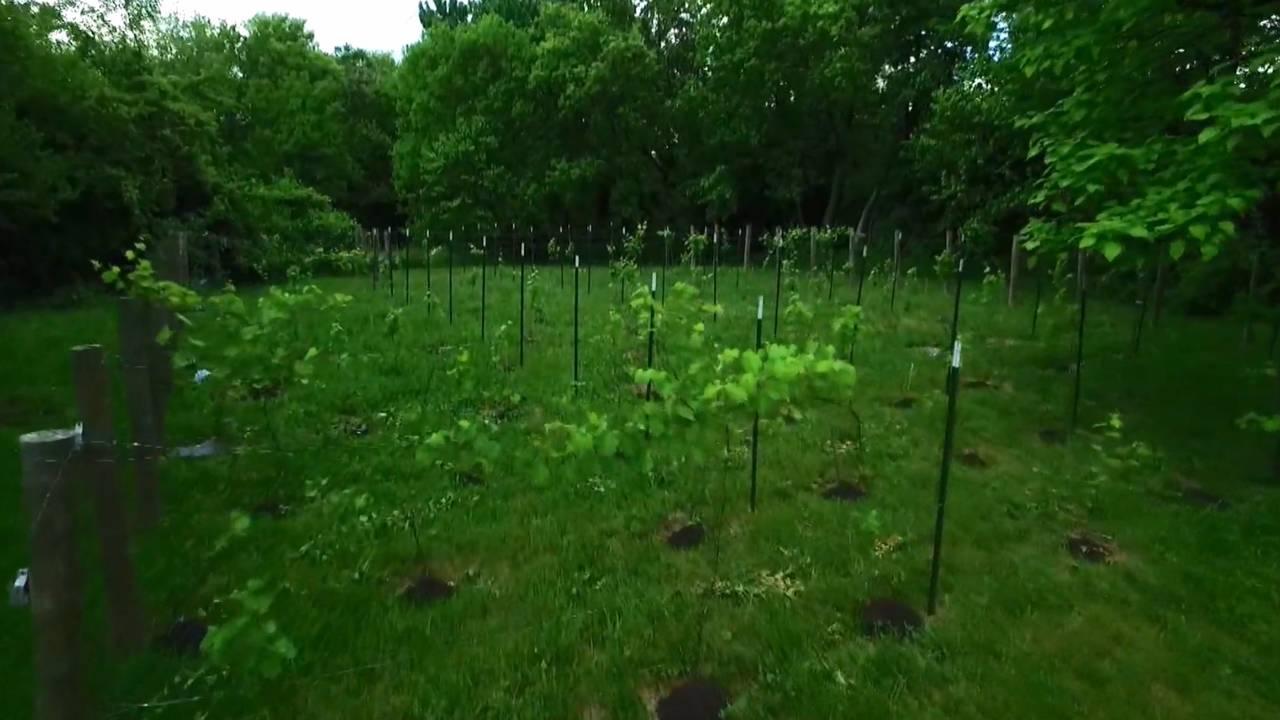 Detroit Vineyards field_1530620642728.jpg.jpg