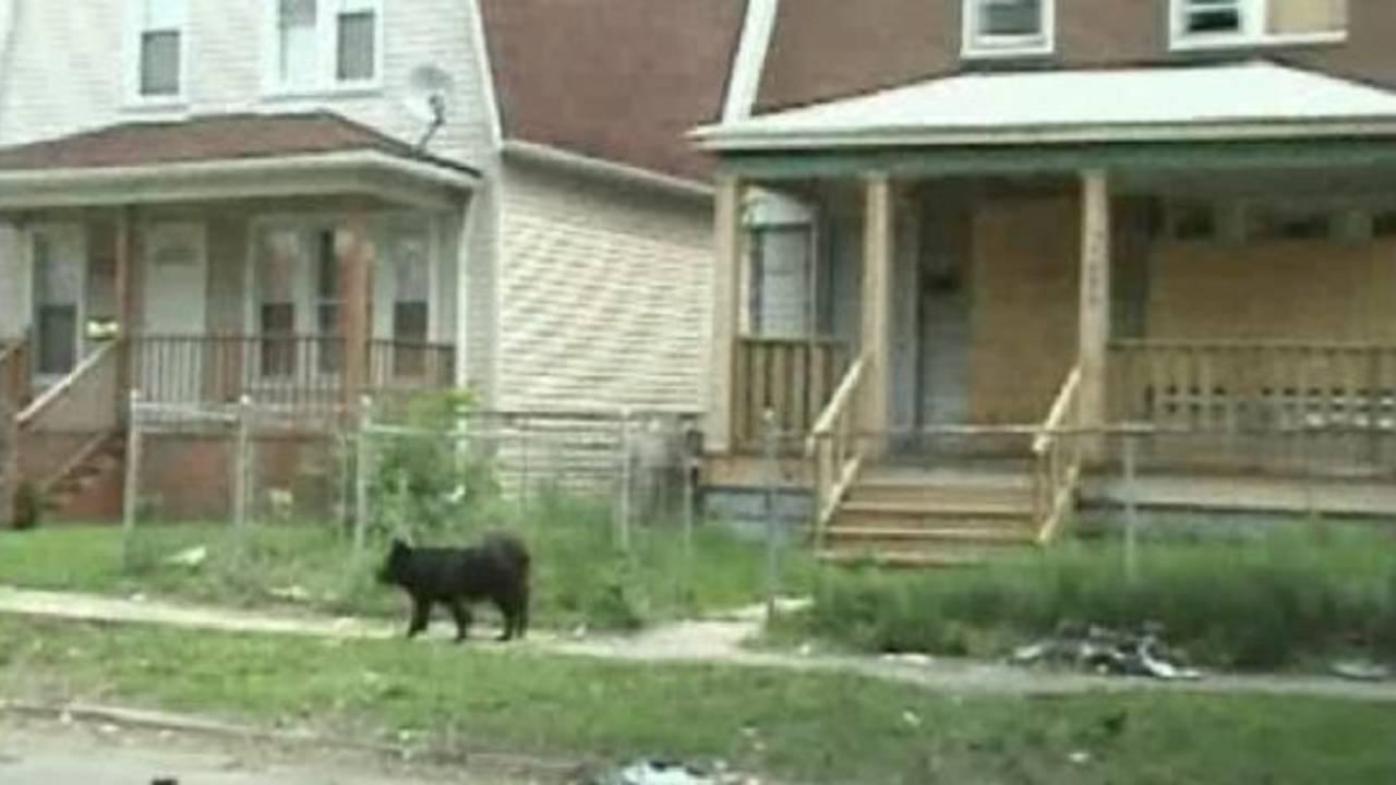 stray-dog-detroit.jpg_22062736