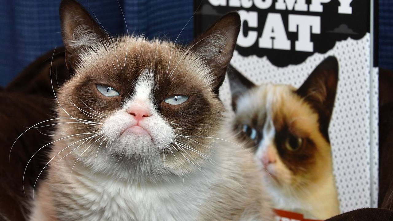 grumpy cat_1502206091224-75042528.jpeg14237186