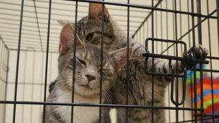 Rescued animals from Panhandle available for adoption at SPCA of Brevard
