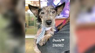 PHOTOS: Dante the dog