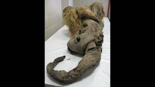 90-year-old Japanese scientist dreams of resurrecting woolly mammoth