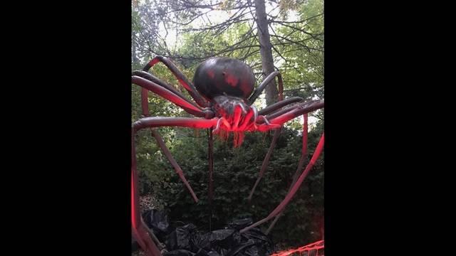 THG Spider 1