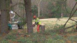 Tree service company offers advice as warm weather settles in