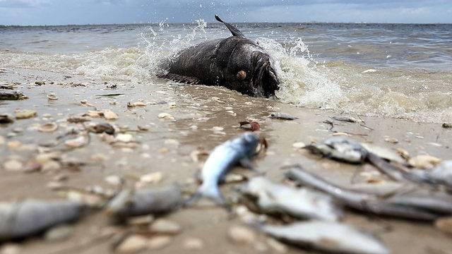 Florida S Toxic Algae Red Tide Green Slime Be Careful