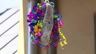 NIOSA officials hang 'rain rock' before annual Fiesta event