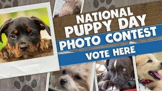 KSAT's National Puppy Day Photo Contest! Who has the cutest puppy in San&hellip&#x3b;