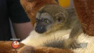Baby animals from Animal world and snake farm zoo