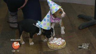 PAWty it up with the Puppies at the Humane Society