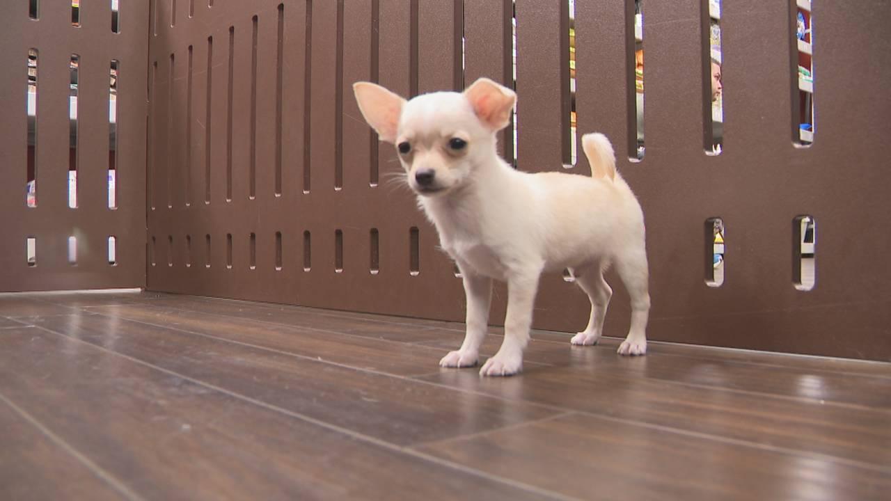 Pet store donates puppy to Broward girl