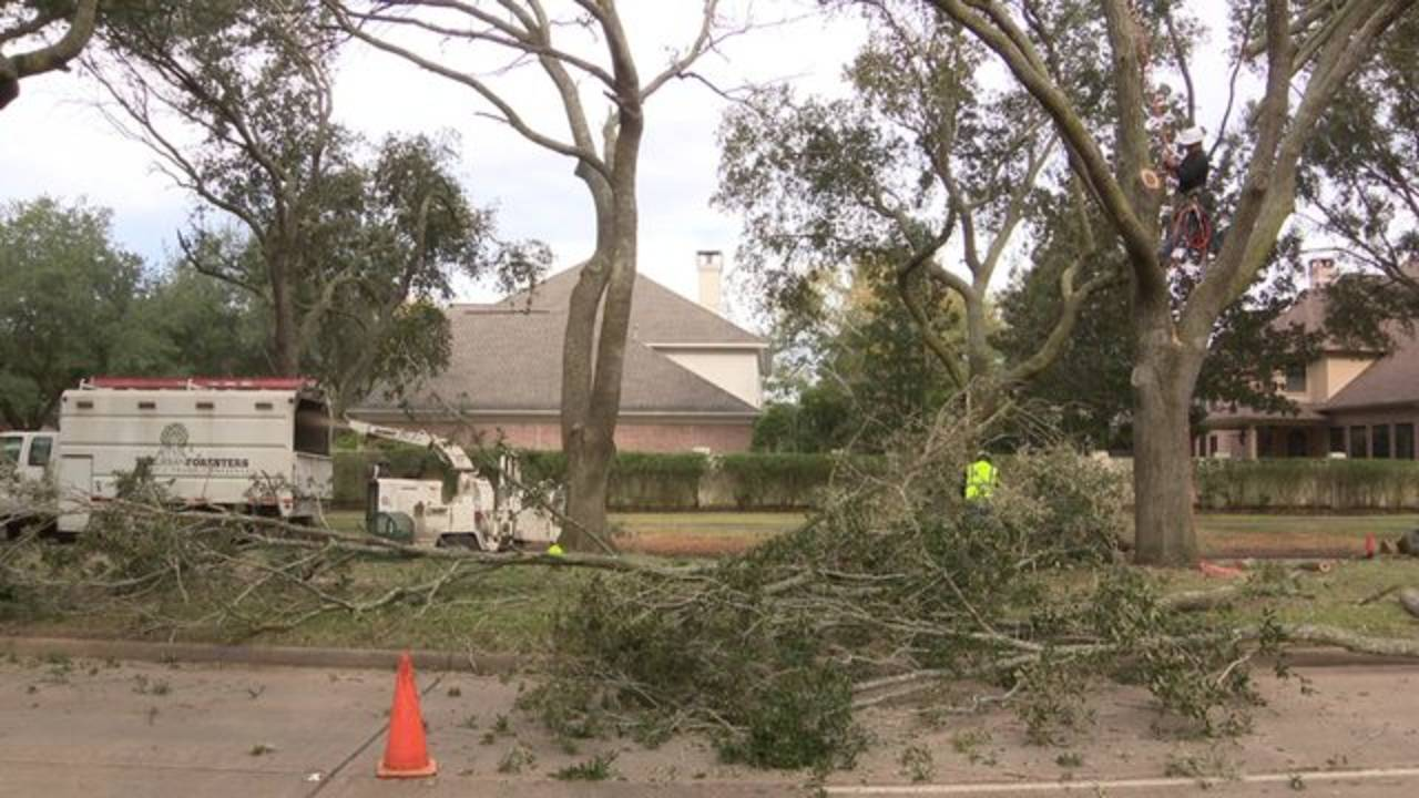 sugar land tree removal