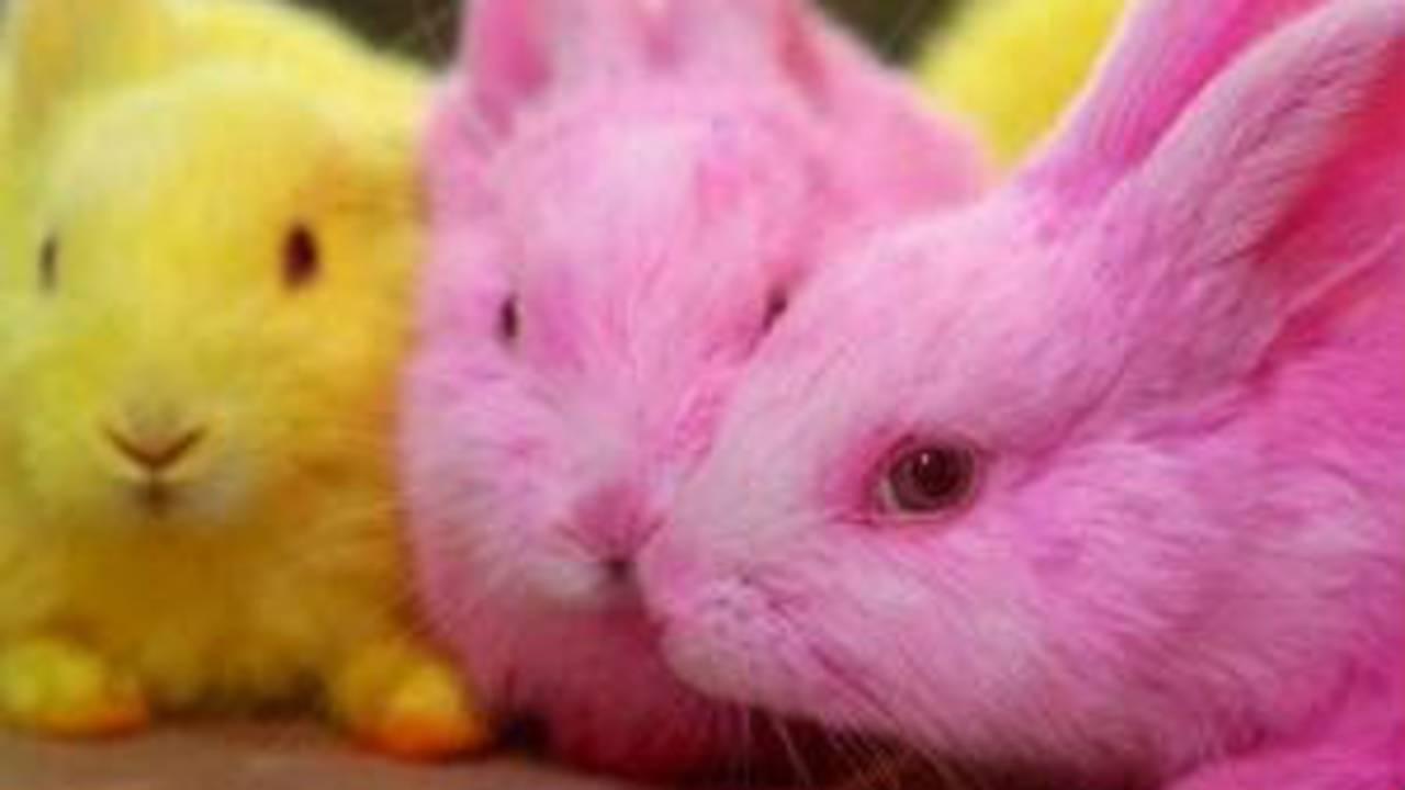 colored-bunnies-041017.jpg