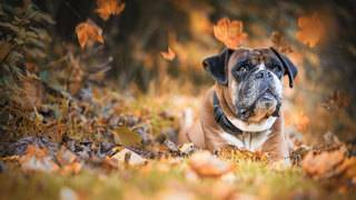 Laws penalize owners for leaving pets out in cold weather