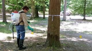 Michigan awards $3.6 million in grants to combat invasive species in 2018