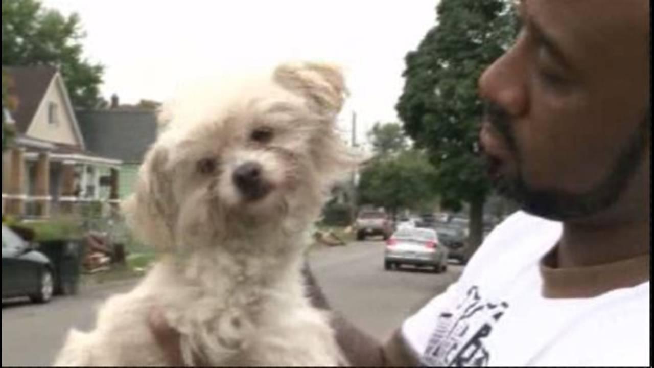 Detroit's stray dog problem under international microscope