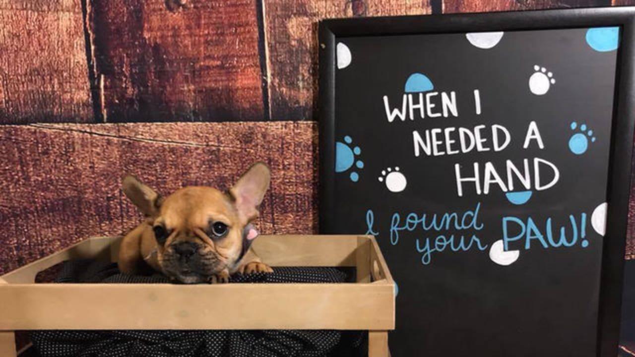 Stolen puppy in Largo