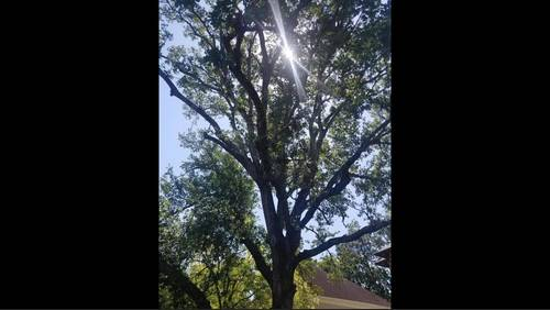 Frank's Weather or Not: Save the Trees, Please!