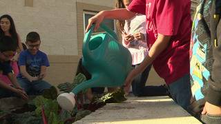 Program helps students learn to grow, harvest, cook vegetables