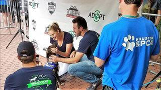 Justin Verlander, Kate Upton raise awareness for dog adoption at Minute&hellip&#x3b;
