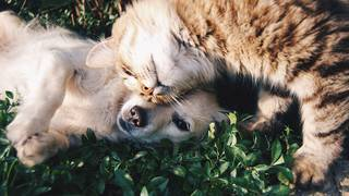 Cat or dog: Which is right for you?