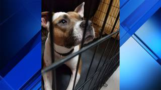 Miami Gardens man seriously hurt in dog attack