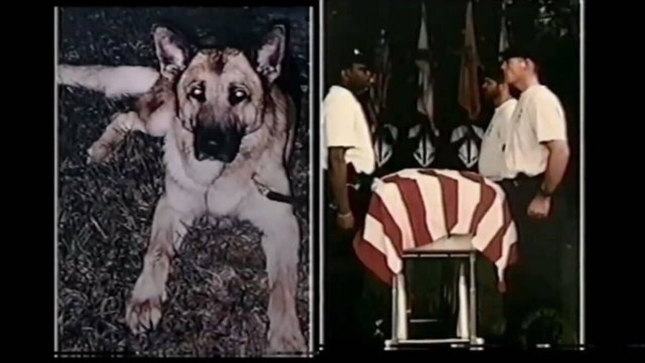 10-02 Tribute video of JSO K-9 Quanto