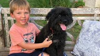 Missing dog for sale on popular website returned home to family, owner says