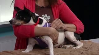 Adopt a pet: Meet Pinky