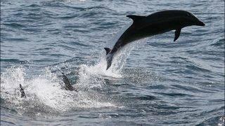 Virgin Holidays stops marine tourism