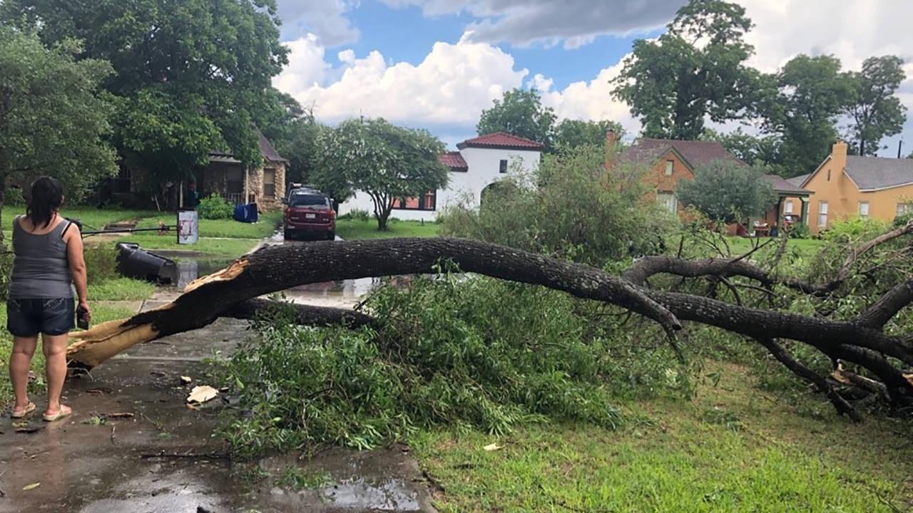 tree-damage-magnolia_1559866510453.jpg