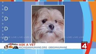 Ask a Vet: Why does this happen to my pet?