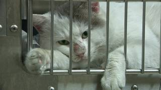 Free adoptions at Harris County Animal Shelter thanks to anonymous donor