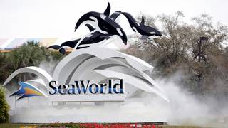 SeaWorld CEO resigns after less than a year on the job