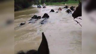 Woman helps rescue more than 1,000 abandoned animals during Harvey