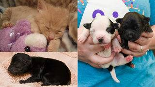 SA Humane Society in urgent need of supplies for puppies and kittens