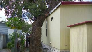 Woman says leaning oak tree has shifted her mobile home in Pembroke Park