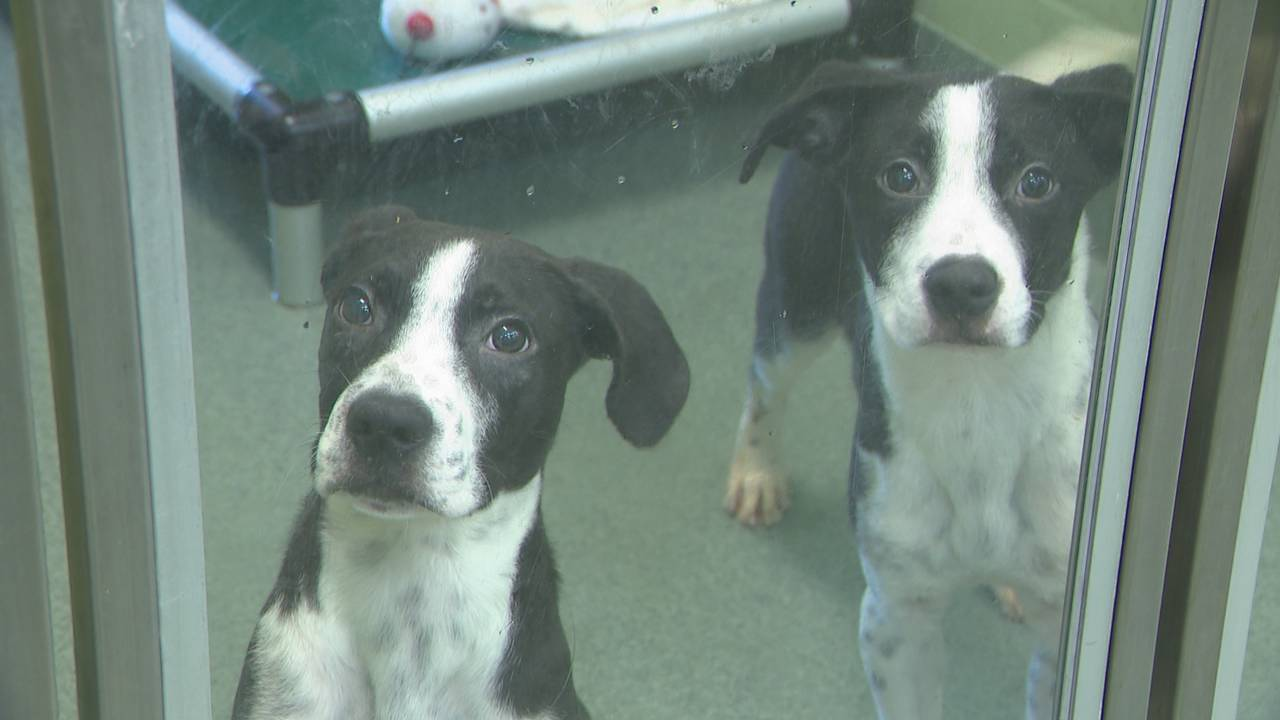 Dogs at the Humane Society of Broward County