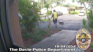 Man caught on camera stealing pit bull puppy in Florida