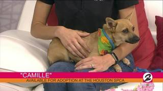 "Help dogs like ""Camille"" find loving homes"