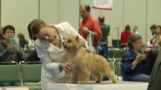 American Kennel Club dog show comes to Orange County Convention Center
