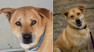 Dog that has spent 7 years in Bulverde shelter to meet with prospective&hellip&#x3b;