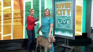 Common Household Items That Can Be Poisonous for Your Pets | River City Live