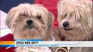 Adopt pets: Mimi and Molly