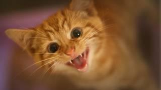 Kitten takes ride in car grill