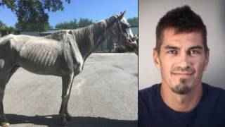 Owner of emaciated horses arrested in Lake County, deputies say