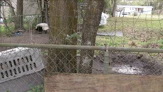 Satsuma family says neighbor's dog killed 2 other dogs in same yard