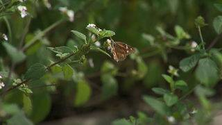 Judge dismisses wall lawsuit brought by butterfly conservationists