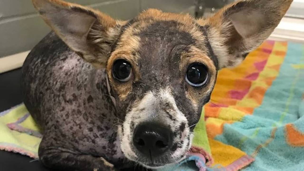 Jacksonville Humane Society, other shelters seek help after Irma