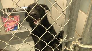 ACS officers tasked with investigating serious animal abuse cases
